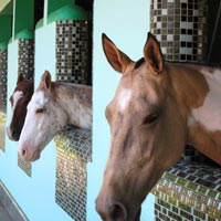 Brunei guide, Sultan's polo ponies