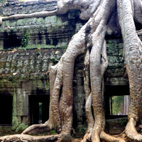 Angkor guide, Ta Prohm temple