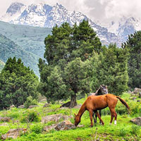 Bishkek fun guide, Ala Archa park in the Tian Shan mountains not far from Alamedin Gorge