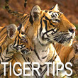 India tiger spotting and game reserves