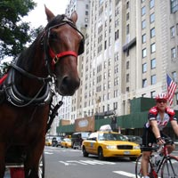 New York fun guide for families, horse buggy near Central Park