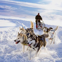 Dog dledding in Canada - offbeat vacations