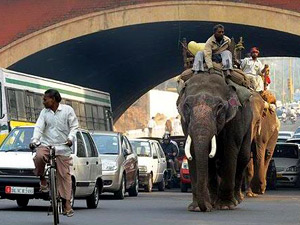 Delhi roads are made for walking: elephants too