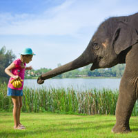 Fun stuff for kids galore at Angsana Phuket - play with baby elephants