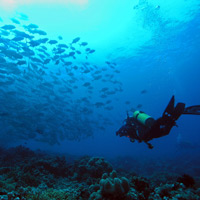 Best dives in the Philippines, Tubbataha