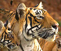 Guide to India tiger safaris and jungle lodges
