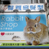 Causeway Bay pet store for rabbits