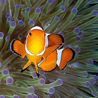 Andaman Island diving, image by Dive India