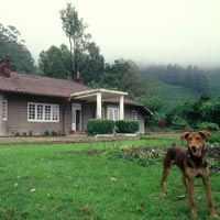 Munnar tea planter's cottage