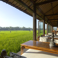 Bali resorts review, Tanah Gajah rice fields, Ubud, one of the best Bali boutique hotels