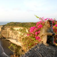 Bali guide, Uluwatu Temple monkeys