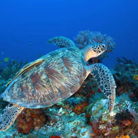 Lombok dives, spot turtles and coral or simply snorkel