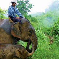 Elephant safaris and hikes from Tiger Trails