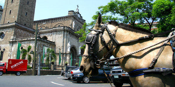 Manila fun guide, calesa horse carriage at Intramuros in from of the Manila Cathedral