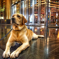 Manila luxury hotels, City of Dreams security - sniffer dog