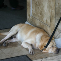 Manila fun guide, sleeping guard dog in Makati