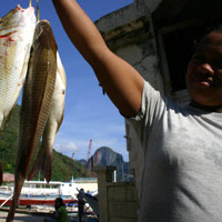 Palawan guide, fresh fish at El Nido