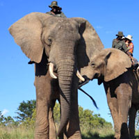 Elephant safaris at Addo Elephant Park
