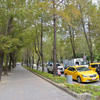 Taipei guide, Zongshan District is lined with shade trees