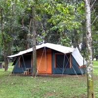 Farm Chokchai tent stays are rustic