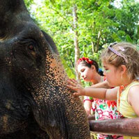 Phuket fun guide, elephants at Siam Safari