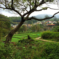 Cheng Lung Village near Tai Mo Shan has hearty dim sum