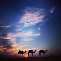 Rajasthan palace hotels guide and camel safaris