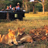 South Africa top resorts, Lionesses at Mala Mala