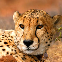 South Africa safaris review, leopard