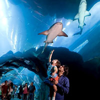 Dubai fun for the family, Dubai Mall aquarium with sharks